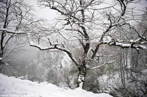 بارش برف در ارتفاعات گیلان ازدقایقی قبل آغاز شده است