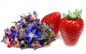 www.laba.ws_Fresh_Strawberries