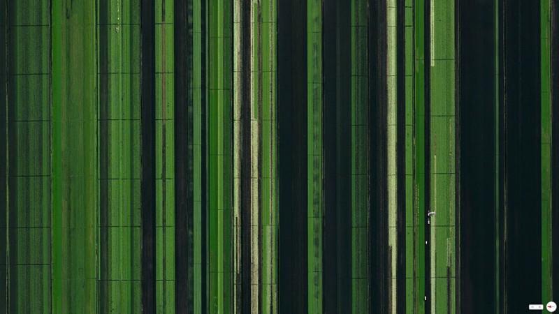 توسعه بخش کشاورزی، فلوریدا، آمریکا