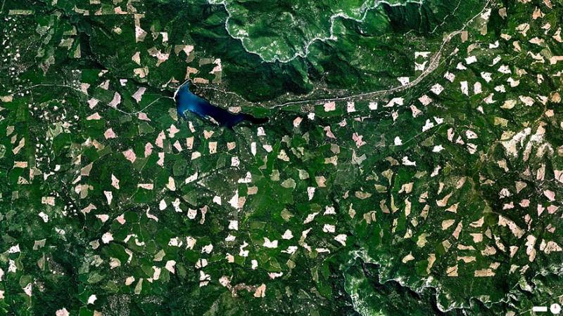 جنگل زدایی در جنگل ملی اِلدورادو، جرج تاون، کالیفرنیا، آمریکا