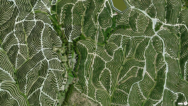 تاکستانهای انگور، ولوا (Huelva)، اسپانیا تاکستانهای پر پیچ و خمی که در امتداد تپههای ولوا در اسپانیا گسترده شده بسیار دیدنی هستند. آب و هوای این نقطه با میانگین دمای 64 درجه و رطوبت بین 60 تا 80 درصد برای رشد و پرورش انگور بسیار مناسب و ایدهآل است.