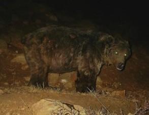 خرس-قهوه-ای-۲-۳۰۰x230