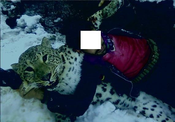 شکارچی پلنگ در شهرستان تالش به 3 سال و شش ماه حبس محکوم شد