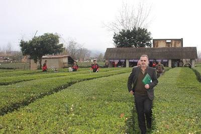 انتقال سازمان چای کشور از لاهیجان به رشت صحت ندارد