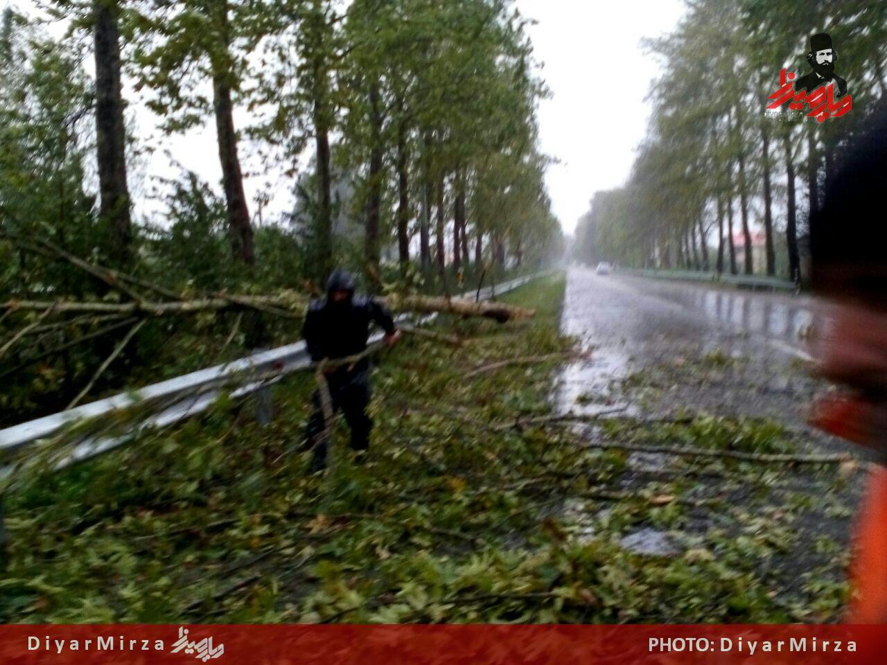 سقوط درخت در جاده فومن