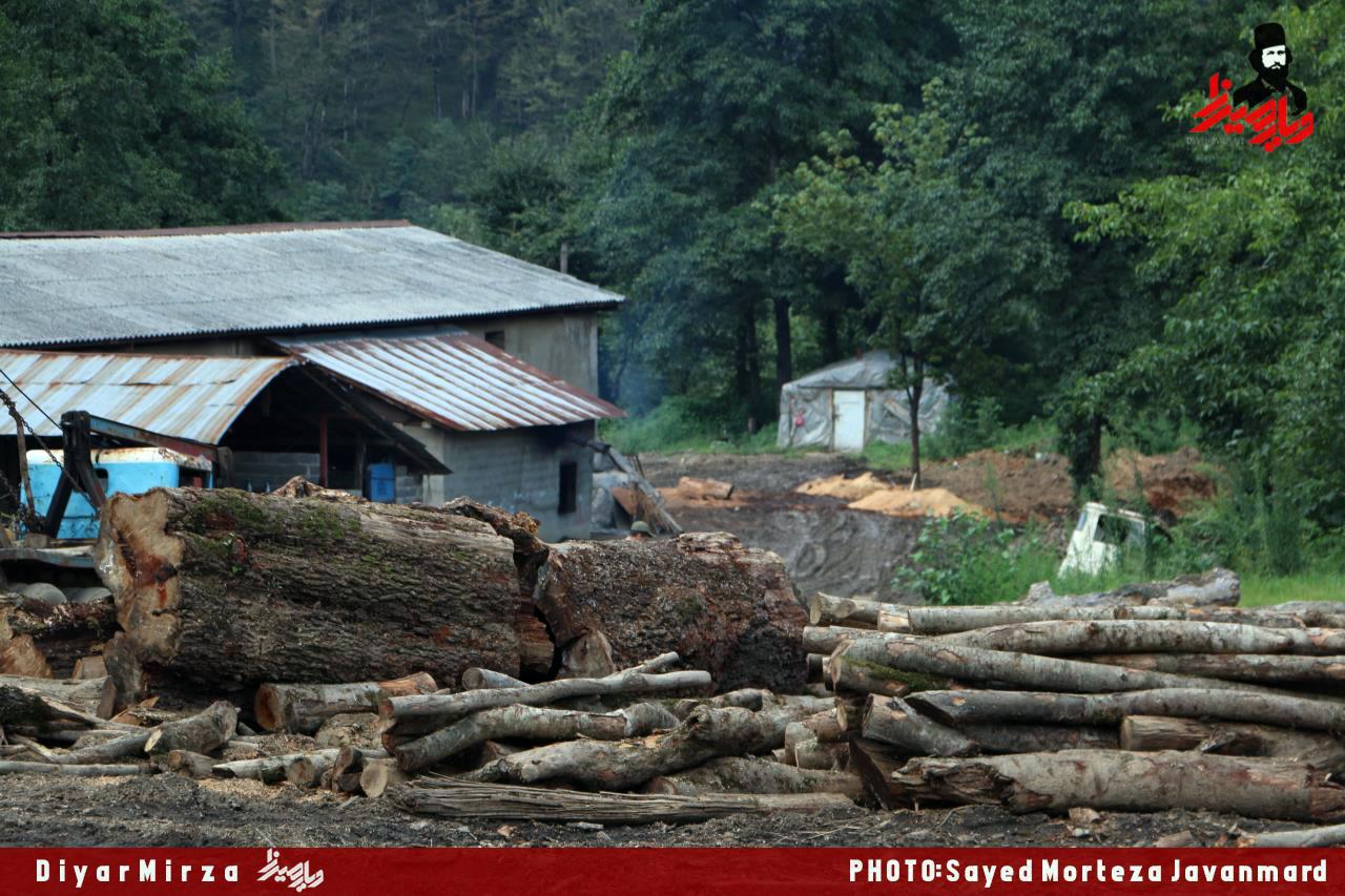 درگیری ۴ تبعه خارجی با ماموران حفاظت پارک جنگلی سراوان رشت