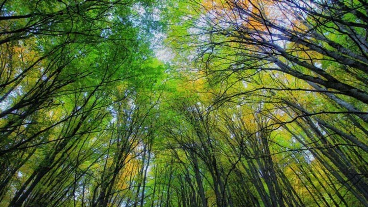 جنگل هیرکانی فتاتو در فهرست آثار طبیعی ملی ثبت شد